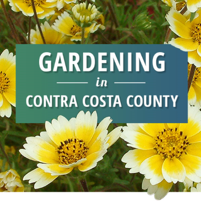 Gardening in Contra Costa County Logo