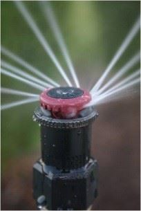 sprinkler head